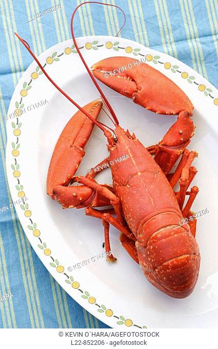 Lobster, Île de Ré, Atlantic Coast. Charente-Maritime, Poitou-Charentes, France