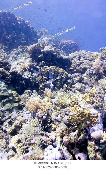 Various coral formations in the Red Sea