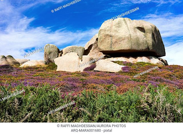 Granite stone and wildflowers in summer in Ploumanach, Brittany, France