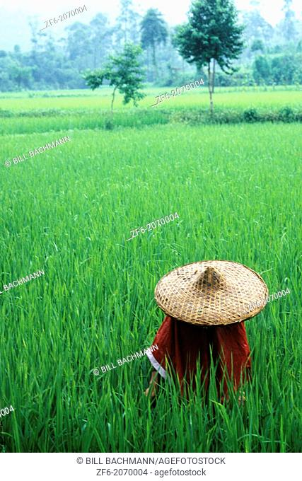 Colorful scenic of rice fields farmer on Yangtze River in China