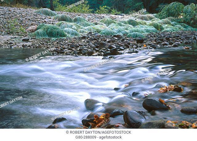 Merced River in fall. Yosemite National Park. California. USA