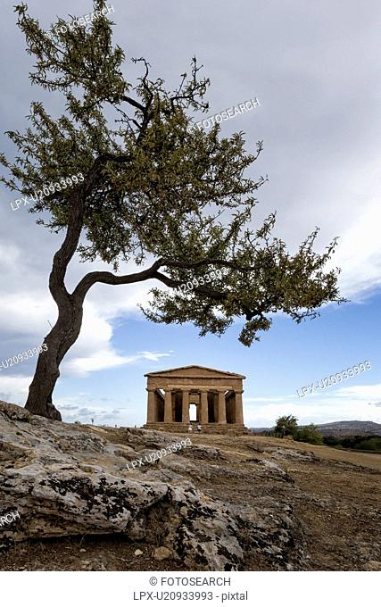 Greek Temple of Concordia with olive tree, Agrigento, Sicily, It