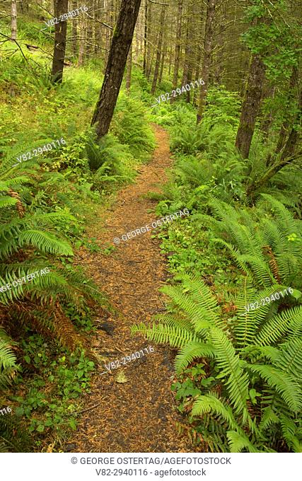 Outer Loop Trail, Miller Woods Conservation Area, Yamhill County, Oregon