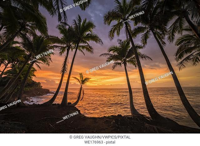 Coconut palm trees and sunrise at Kama'ili, Kalapana coast, Big Island of Hawaii