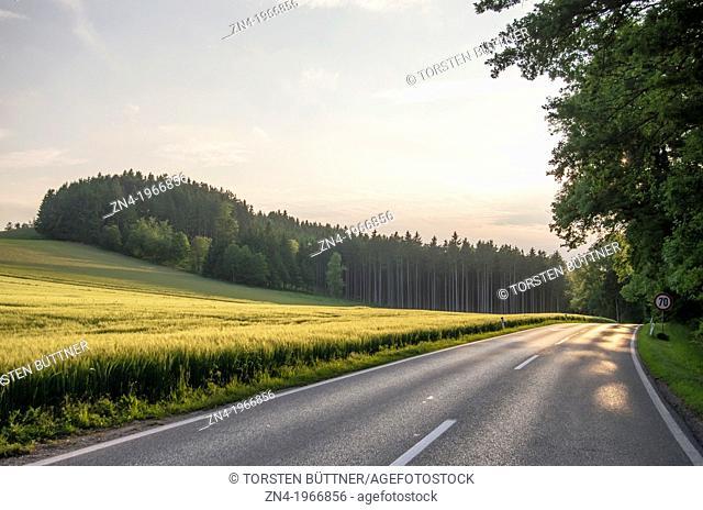 Country Road Passes Wheat Field at Sunset near Bad Schallerbach, Upper Austria, Austria