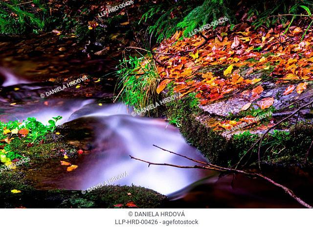 Waterfall, Jeseniky, Czech Republic, Europe