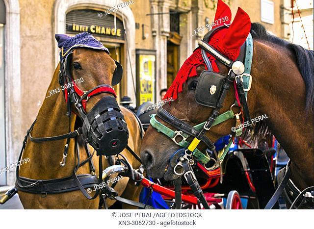 Decorated horses, Piazza di Spagna, Spanish square, Rome, Italy, Europe