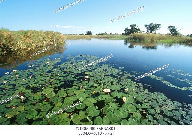 Lily Pads and Marshes Scenic  Okavango Delta, Botswana