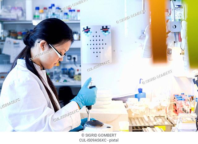 Female scientist pipetting specimens in laboratory
