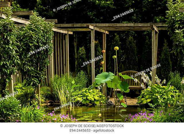 A backyard garden with an arbor and pond with sacred lotus plants and perennials. Pittsburgh Pennsylvania USA
