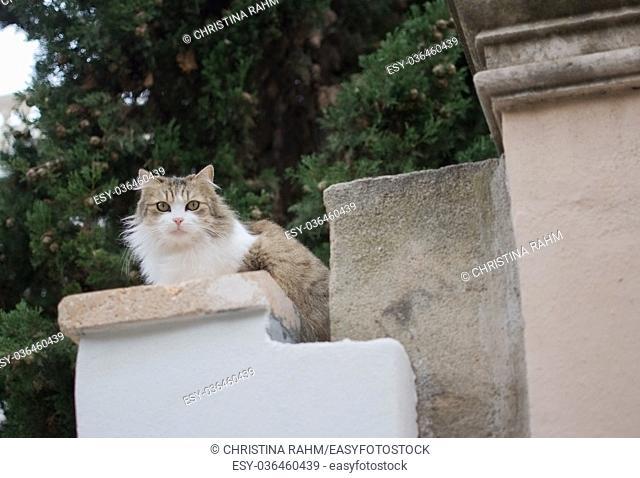 Fluffy cat perching on a stone pillar in Palma, Mallorca, Spain