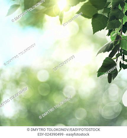 Beauty seasonal backgrounds with shallow focus and natural bokeh
