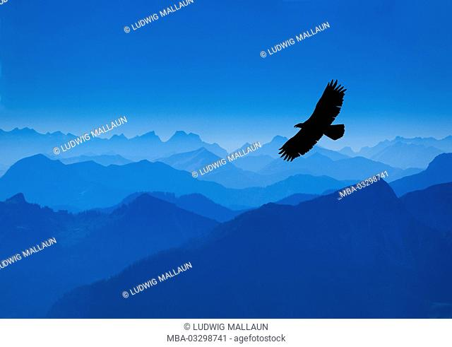 Mountaintop, Wendelstein, panorama, eagle