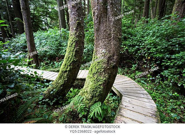 North America, Canada, British Columbia, Vancouver Island, Pacific Rim National Park Reserve, boardwalk