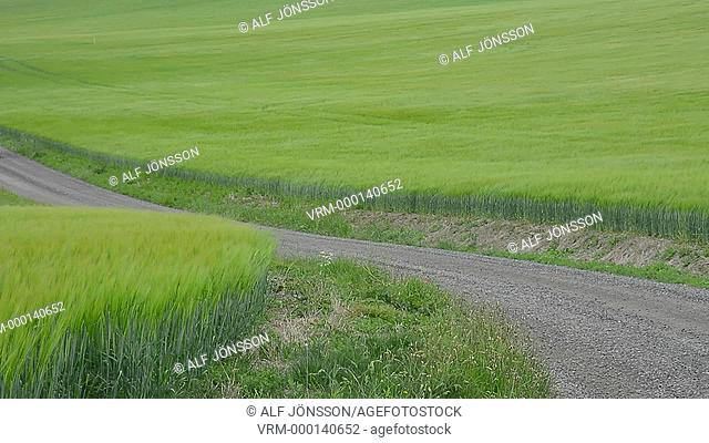 Car on a tiny road among green fields