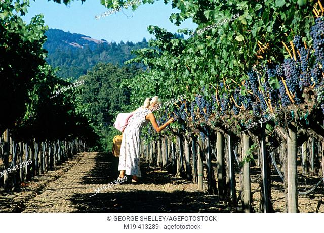 girl going on a picnic in a vinyard