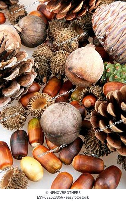 set of autumn nature elements
