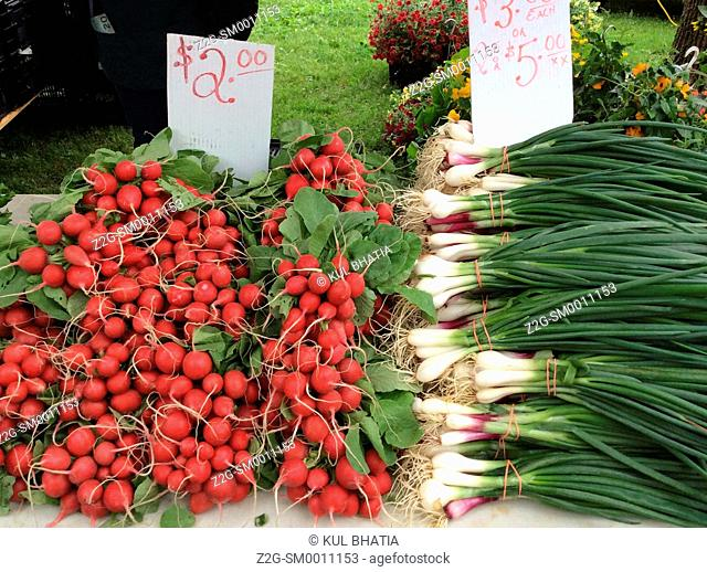 Bunches of radishes and onions at a farmer's market, Ottawa, Ontario