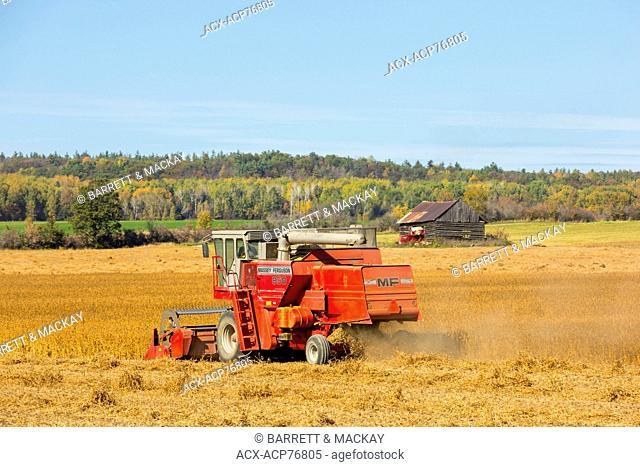 Harvesting Soybean, Ottawa River Valley, Canada