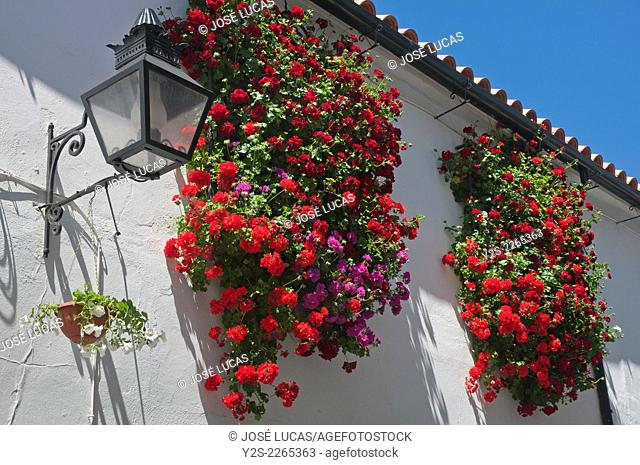 Windows with flowers, Cordoba, Region of Andalusia, Spain, Europe