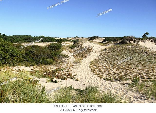 Dunes, Truro, Cape Cod National Seashore, Massachusetts, United States, North America