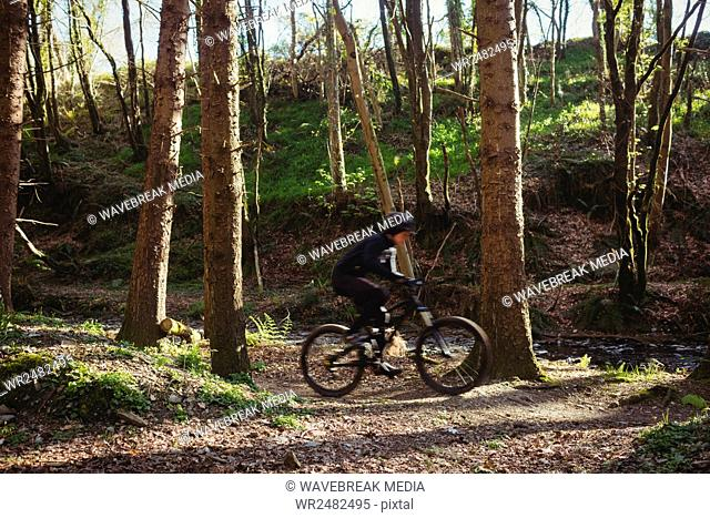 Mountain biker riding bicycle in forest
