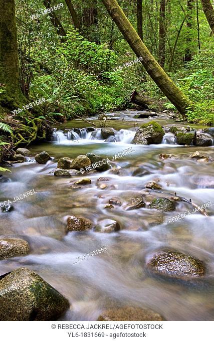 A river running through a forest in Santa Cruz, CA