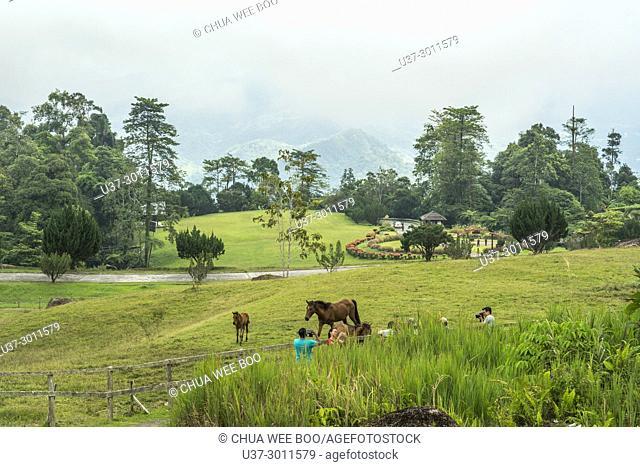 The Panoramic View Of Borneo Highlands, Sarawak, Malaysia