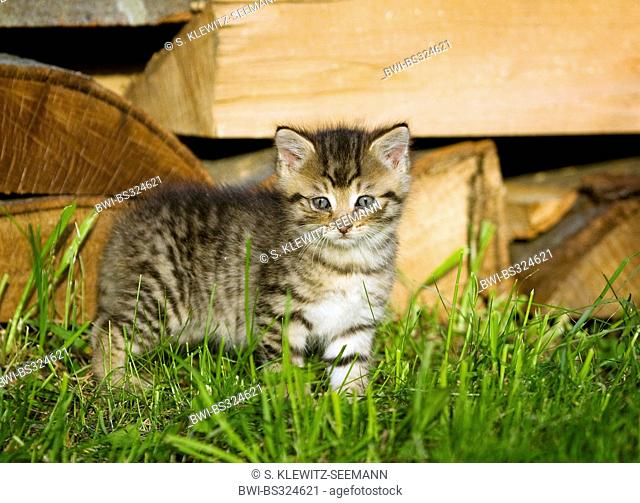 Kitten on Firewood Log Pile, Stock Photo, Picture And Rights
