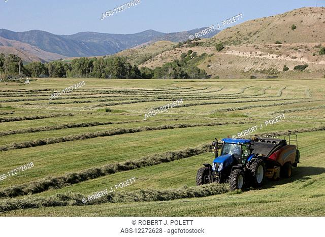 New Holland T7 Tractor with BB340 large square baler baling alfalfa in a river bottom; Preston, Idaho, United States of America