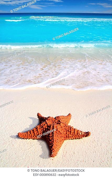 beautiful caribbean starfish tropical sand turquoise beach