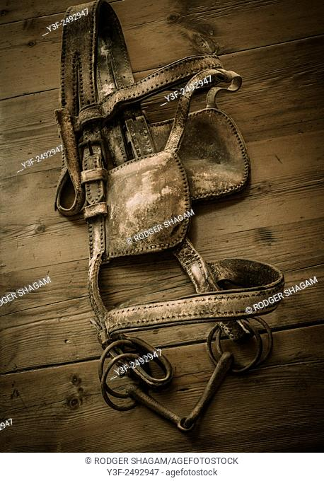 Old leather horse harness with blinkers lie discarded on a wooden table