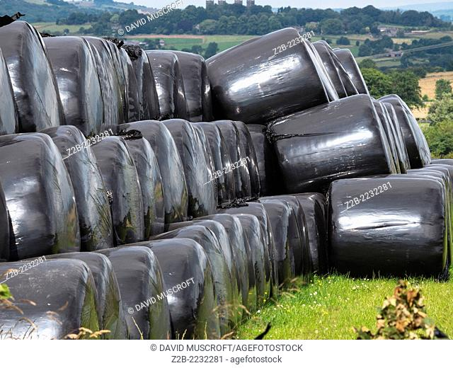 Hay bales wrapped in black plastic, Derbyshire, UK