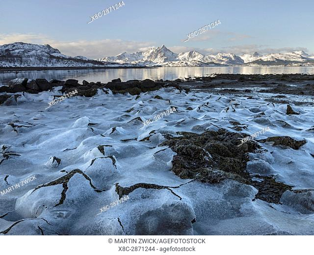 Landscape with seaweed near Leknes, island Vestvagoy. The Lofoten islands in northern Norway during winter. Europe, Scandinavia, Norway, February