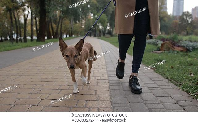Cute puppy with owner walking in autumn park