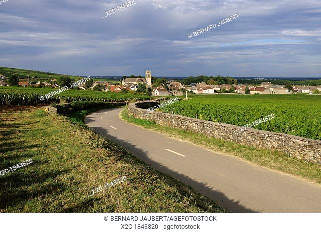 Vineyard and village of Pommard, Cote d'Or, Route des grands crus, Burgundy, France, Europe