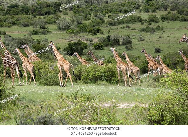Massai mara is one of the biggest game reserves in kenya It borders Serengeti national park Tanzania Almost all kind of wildlife can be observed The park is...