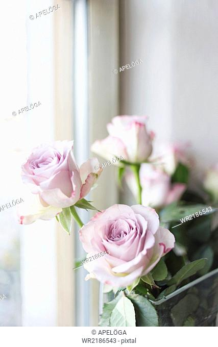 Close-up of pink roses by window in restaurant
