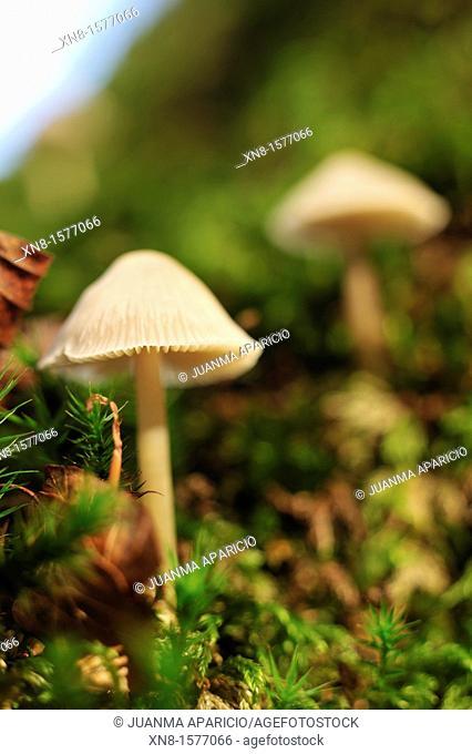 Fungi, Mushrooms
