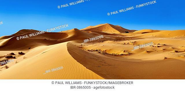 Parabolic sand dunes, Erg Chebbi, Sahara, Morocco