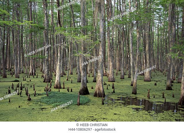 Atchafalaya Basin, cypresses, Louisiana, marsh, scenery, landscape, trees, USA, America, United States