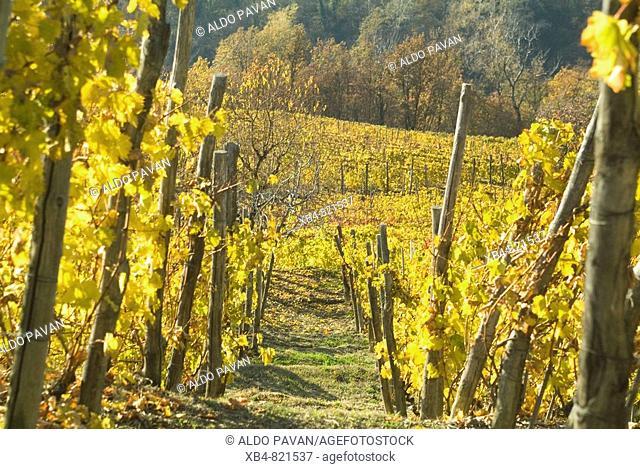 Montferrat, Piedmont, Italy