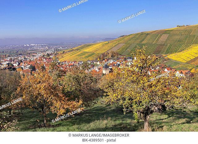 Strümpfelbach in autumn, vineyards, Weinstadt, Baden-Württemberg, Germany