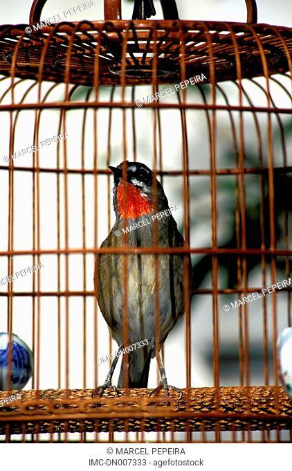 China, Hong Kong, Yuen Po bird market