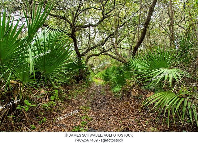 Walking trail though tropical woods in Oscar Scherer State Park in Nokomis Florida