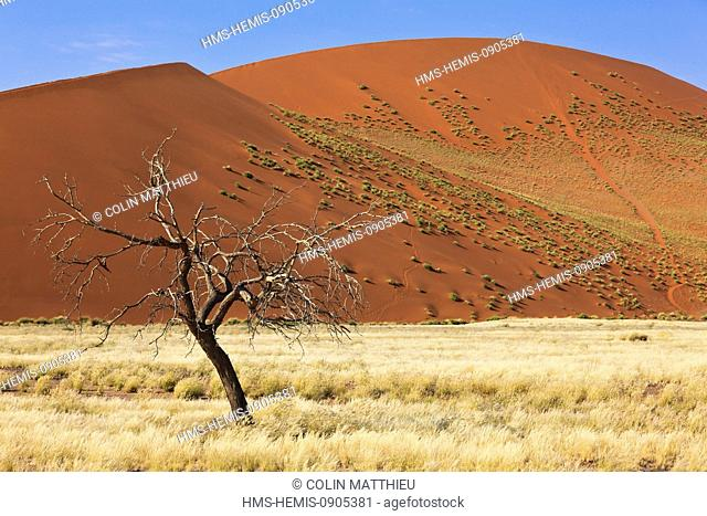 Namibia, Hardap region, Namib desert, Namib-Naukluft national park, Namib Sand Sea listed as World Heritage by UNESCO, Sossusvlei, sand dunes, tree