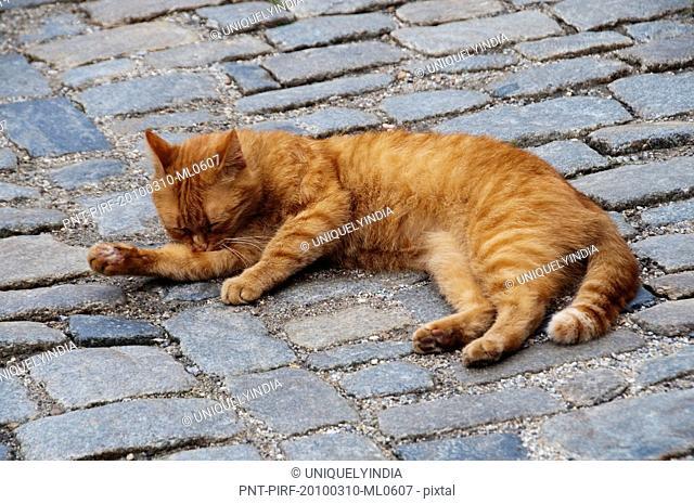 Cat sleeping in a street, Cesky Krumlov, South Bohemian Region, Czech Republic