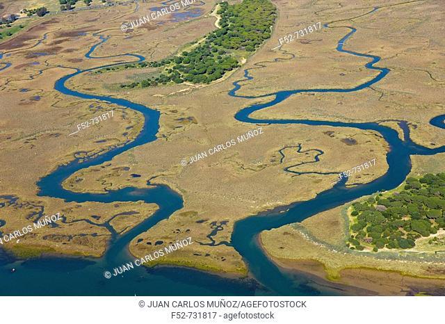 Punta Umbria marshes. Huelva province, Andalucia, Spain