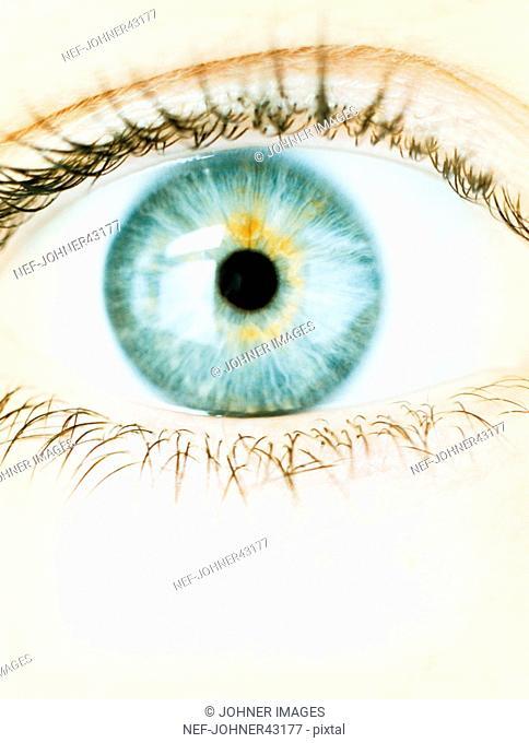 Closeup of open eye