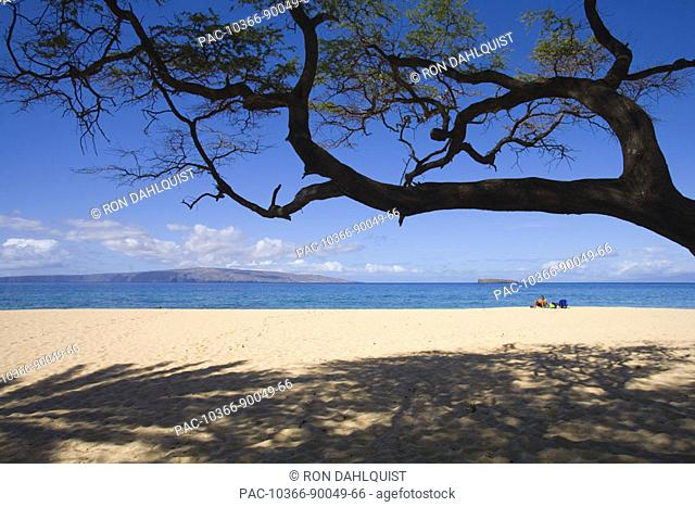 Hawaii, Maui, Makena, Big Beach, sandy beach with tree overhead and shadows on sand, vacationer sits in distance